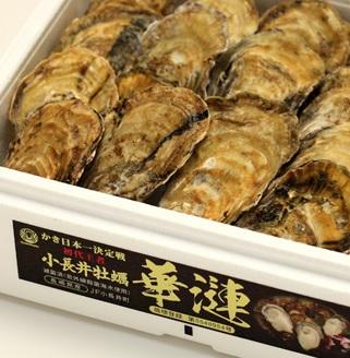 小長井牡蠣「華連」